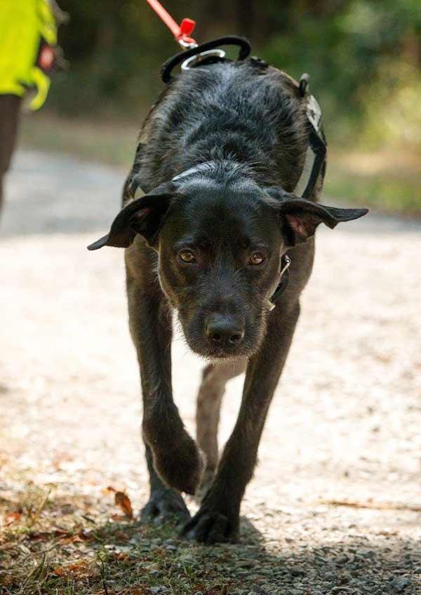 Geruchserkennung Hunde